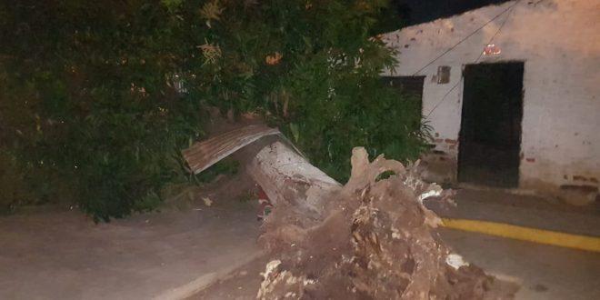 Otro árbol se desploma en Valledupar